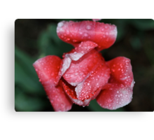 Pink for Breast Cancer Awareness (Tulip) Canvas Print