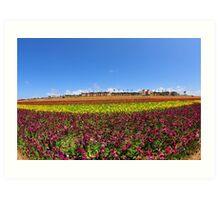Wide view of Flower Field Art Print