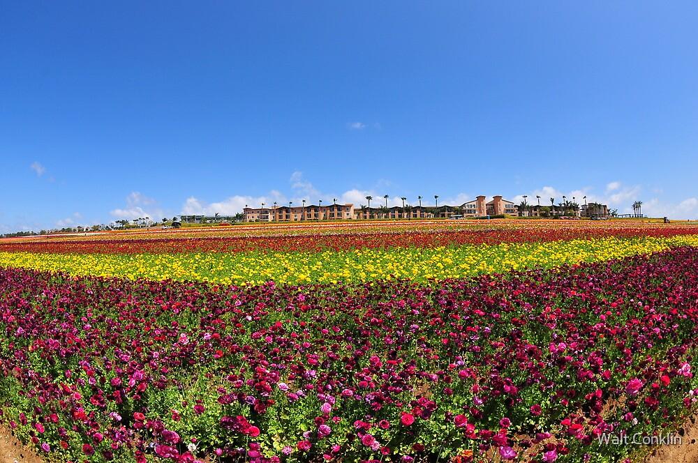 Wide view of Flower Field by Walt Conklin