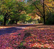Mount Wilson Autumn Blue Mountains NSW Australia - HDR by DavidIori