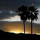 Twin Palms . . . by PattyB46