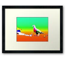 I <3 Pigeons Framed Print