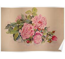Roses and more roses Poster