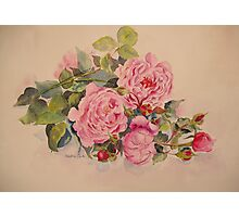 Roses and more roses Photographic Print