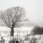 Winter foggy morning and tree silhouette by Tasha1111