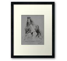 Gypsy Cob Framed Print