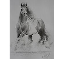 Gypsy Cob Photographic Print