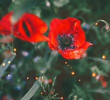 Red Poppies Faery Lanterns by Indea Vanmerllin