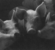 Piglets by Lyn Fabian