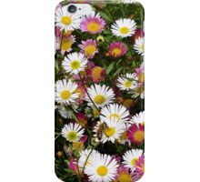 Candy Coloured Daisies iPhone Case/Skin