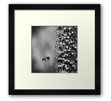 grass-tree flower spike Framed Print