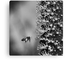 grass-tree flower spike Canvas Print