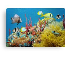 Colorful underwater marine life in a coral reef Canvas Print