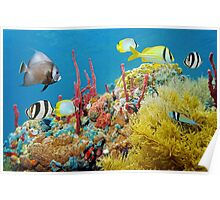 Colorful underwater marine life in a coral reef Poster