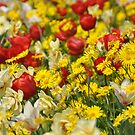 A riot of colour by Heather Thorsen