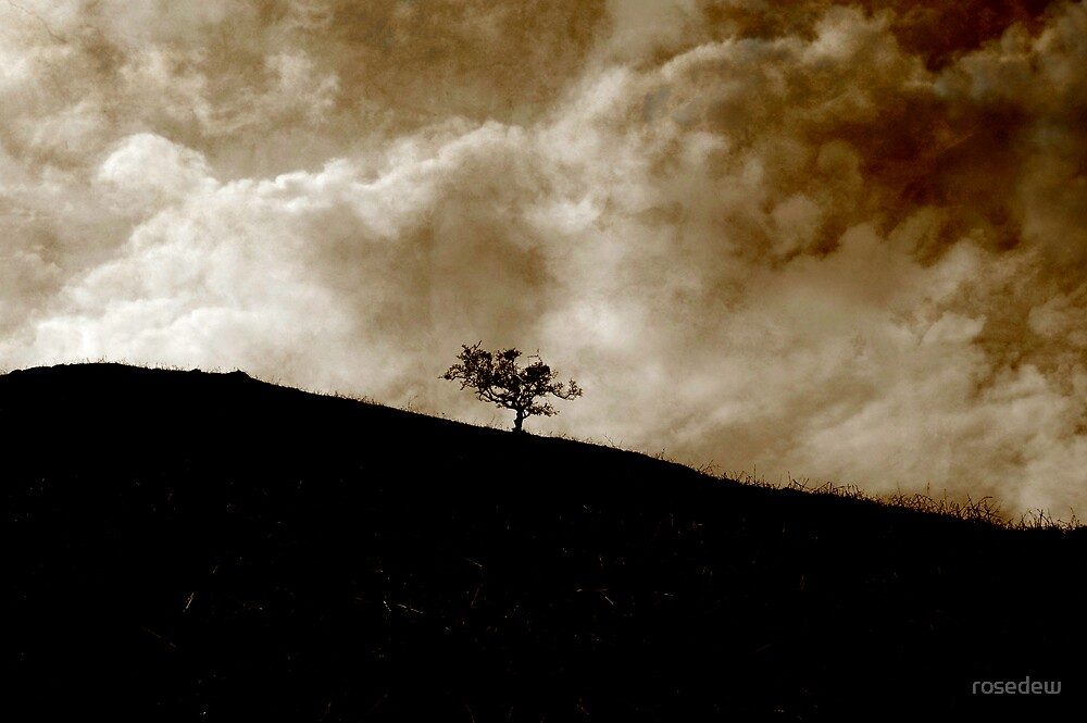 On a Hill by rosedew