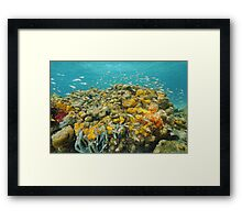 Colorful coral reef with sponge and school of fish Framed Print