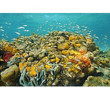 Colorful coral reef with sponge and school of fish Photographic Print