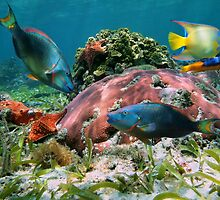 Colorful coral reef and tropical fish by Dam - www.seaphotoart.com