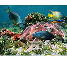 Colorful coral reef and tropical fish Photographic Print