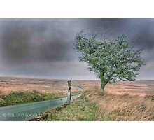 North Wales Tree Photographic Print