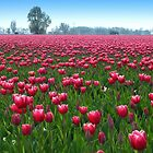 Beautiful Tulipfield by ienemien