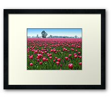 Beautiful Tulipfield Framed Print