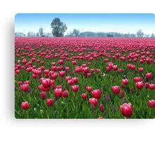 Beautiful Tulipfield Canvas Print