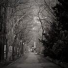 The Path - Austria by Joel  Staples