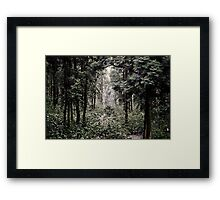 A secret path Framed Print