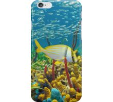 Colorful sea life underwater with shoal of fish iPhone Case/Skin
