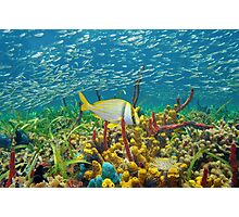 Colorful sea life underwater with shoal of fish Photographic Print