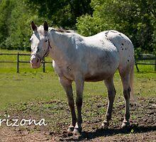 Arizona - NNEP Ottawa, Ontario by Tracey  Dryka