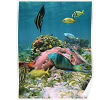 Colorful sea life in the Caribbean sea Poster