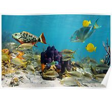 Colorful sea life Poster