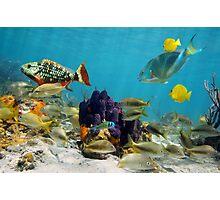 Colorful sea life Photographic Print