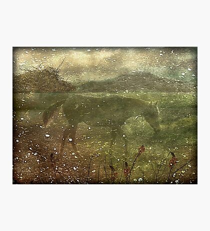 Flora and Fauna Dreamy Collage Photographic Print