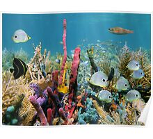 Coral reef with colorful sponges and tropical fish Poster