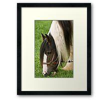 Gypsy Vanner Horse Framed Print