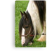 Gypsy Vanner Horse Canvas Print