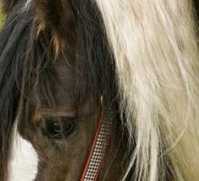 Gypsy Vanner Horse Sticker