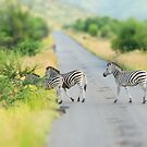 zebra crossing by mellychan