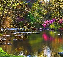 """""""Reflections Of Spring"""" by Melinda Stewart Page"""