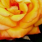 Garden Pleasures - Yellow-Orange Rose - Geel-Oranje Roos by Mariaan Maritz Krog Photos & Digital Art