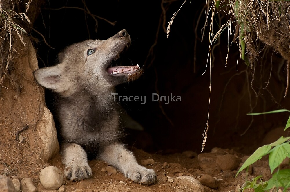 Who's There by Tracey  Dryka