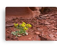 Tough Desert Flower Canvas Print