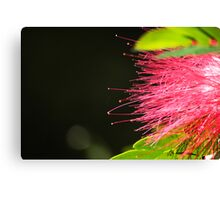 Bottle Brush Lights Canvas Print