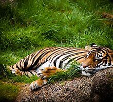 Sleepy Feline by Jenny Miller