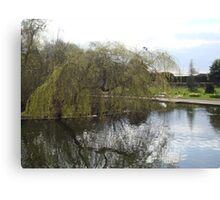 Reflections of A Weeping Willow Canvas Print