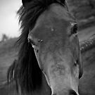 Horsie by Mike Topley